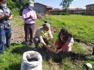 ग्लोबल आइएमई बैंक र त्रिभुवन विश्वविद्यालयको सहकार्यमा वृक्षारोपण